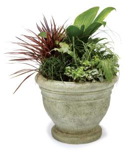 No flowering plants