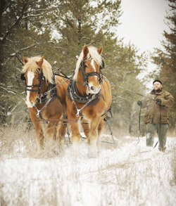 horselogger