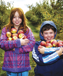Winsted Orchard
