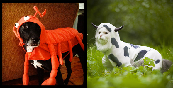 Pets Costume