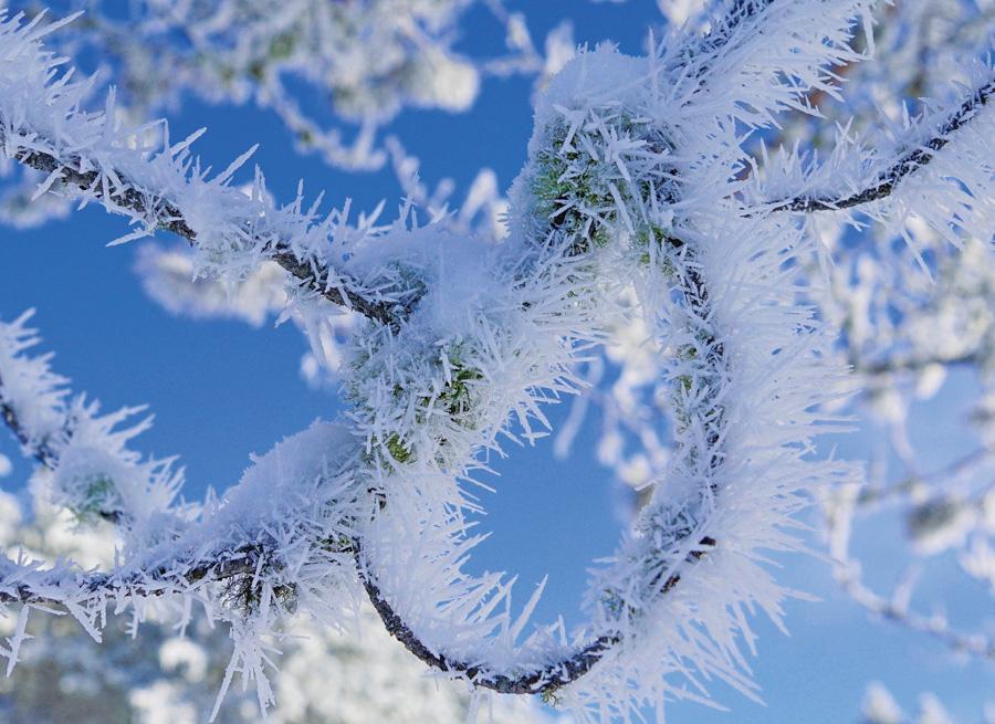 hoarfrost, Minnesota, beautiful winter photos, minnesota scenery, Winter Phenomena, Winter wonder