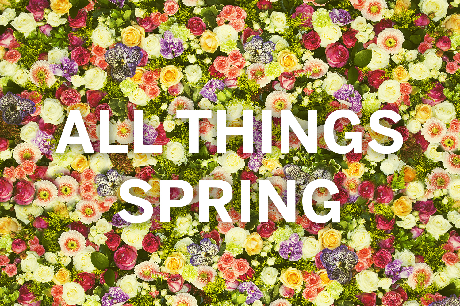 Minnesota Monthly All Things Spring Banner