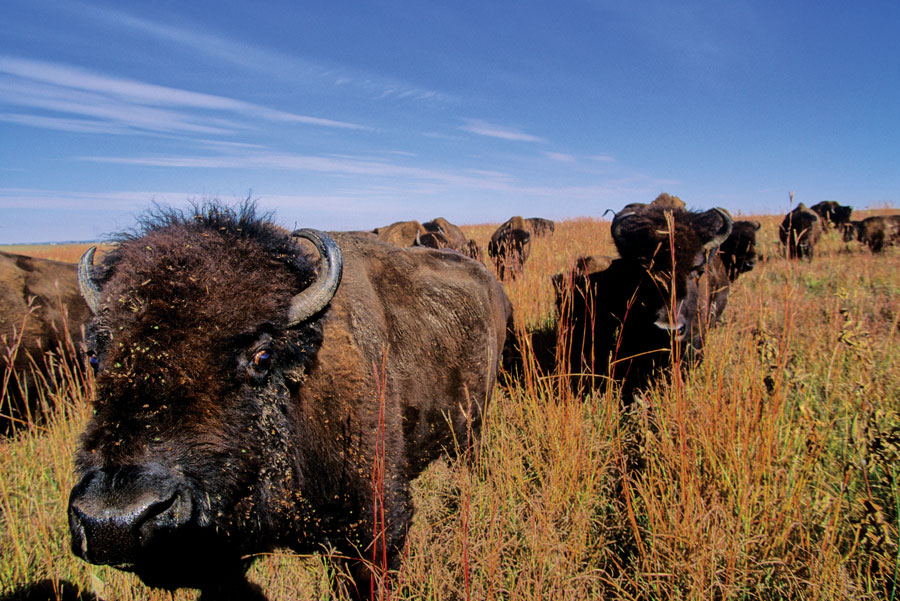 Blue Mounds State Park, Minnesota State Parks, National Parks, fall trips, travel