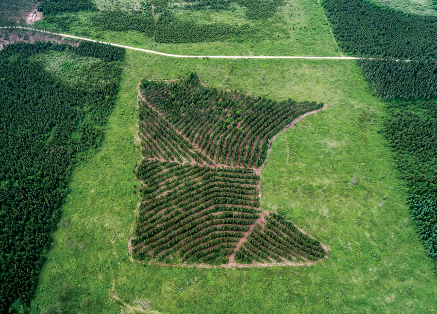 An aerial shot of a forest shaped like the state of Minnesota.
