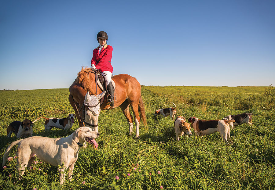 A member of the Long Lake Hounds on horseback with a pack of hounds in search of a fox in a field.