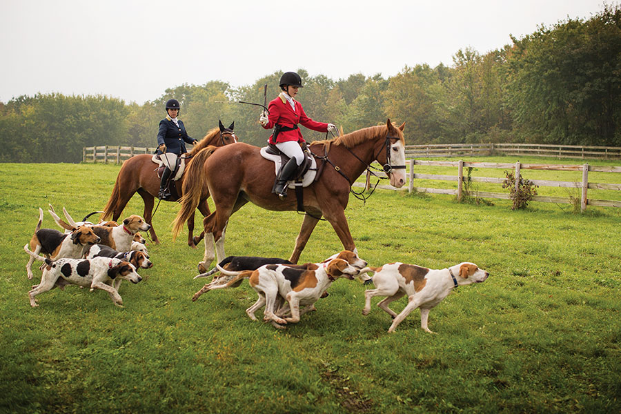 Two members of the Long Lake Hounds on horseback with a pack of hounds chasing the scent of a fake fox.