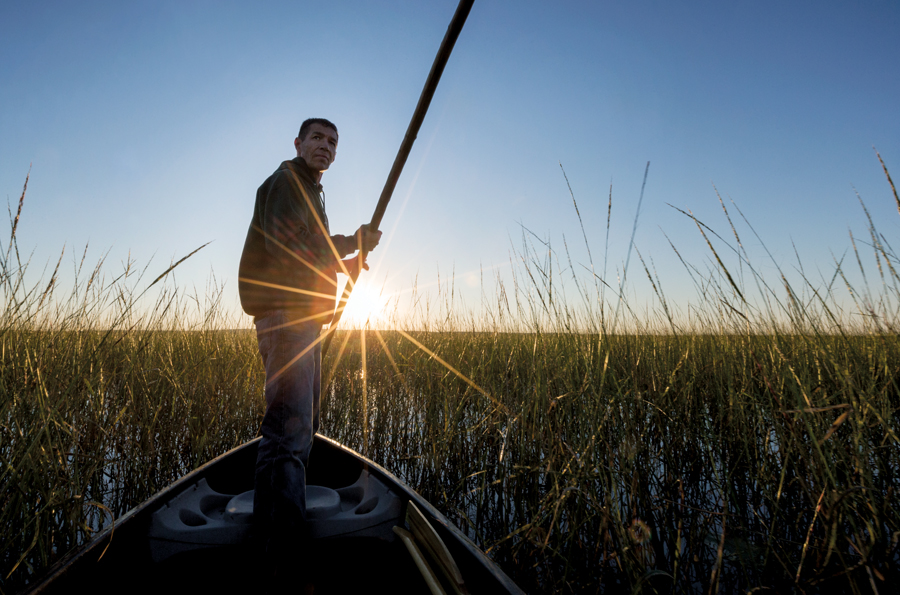 A man in a boat paddling through a lake and collecting wild rice.