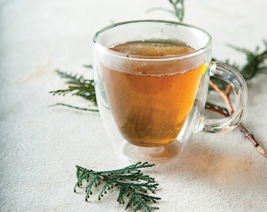A cup of cedar tea next to some pine branches.