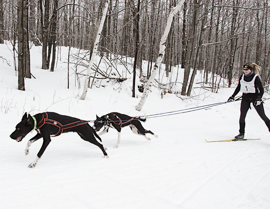 Sierra Anderson skijors on Duluth's Spirit Mountain with eurohounds Ajax and Tramper.