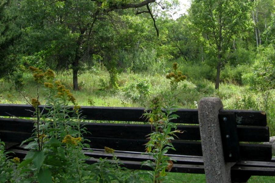 A bench at the Eloise Butler Wildflower Garden in Minneapolis, Minnesota.