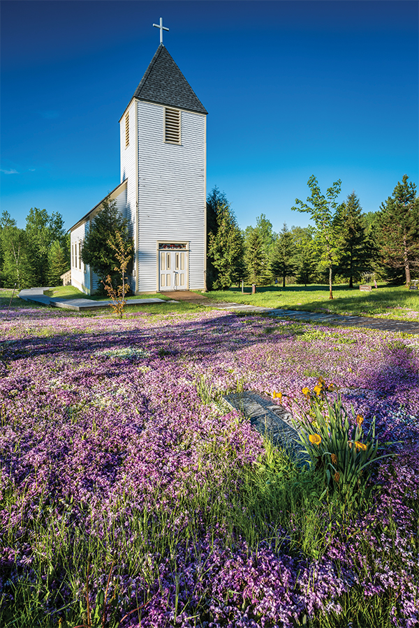 A small white church with tall steeple surrounded by trees and a bunch of purple flowers.