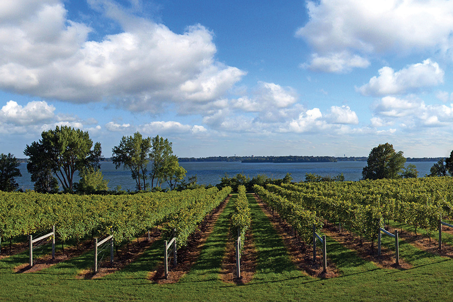 The vineyard overlooking a lake at The Winery at Sovereign Estate in Waconia, Minnesota.