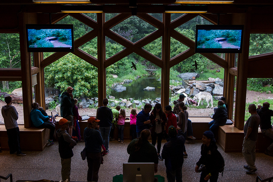 People looking at the wolf enclosure at the Ely Wolf Center.