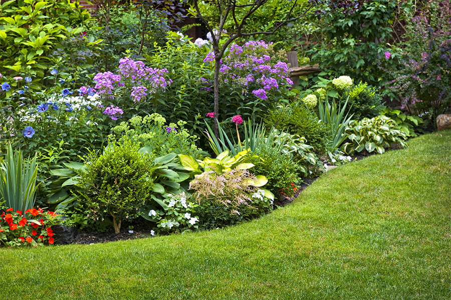 A picture of a garden with lots of different colored flowers.