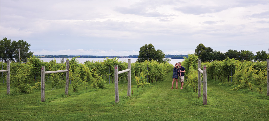 People walking through the vineyard at The Winery at Sovereign Estate.