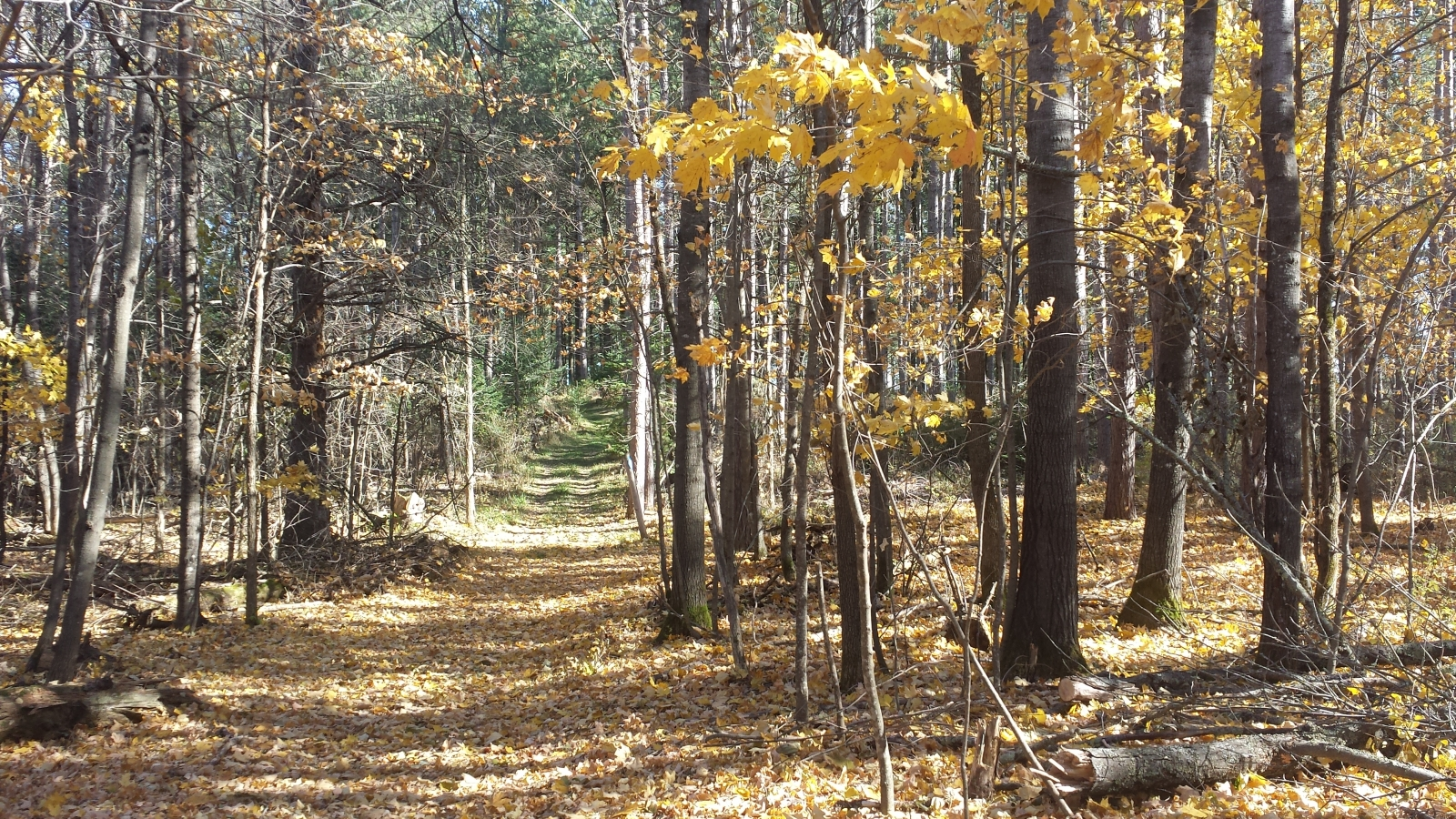 Walking along the trail during a fall day in Moose Lake State Park. Photo by Lianna Matt.