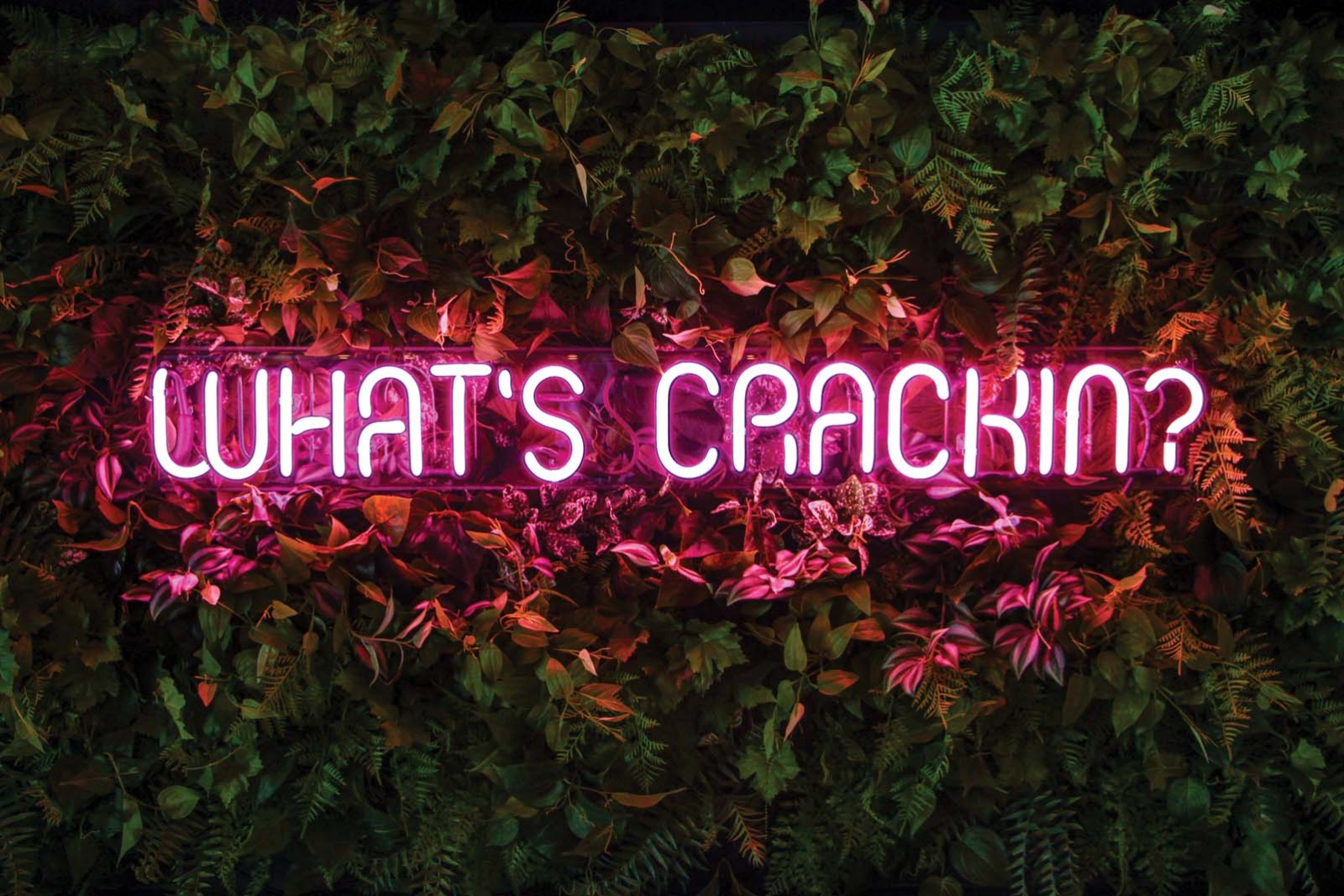 "A neon sign that says ""What's crackin'?"""