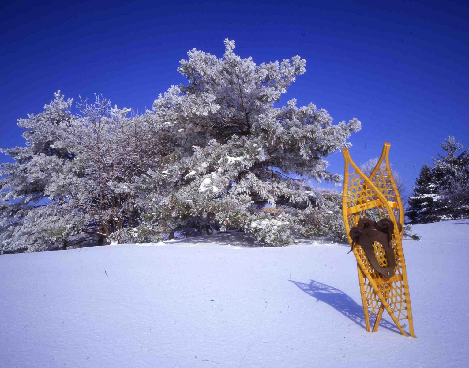 Snowshoes at Minnesota Landscape Arboretum