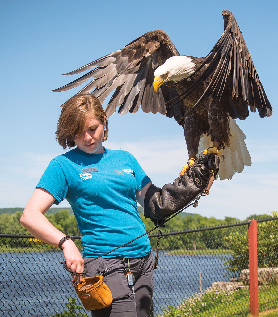 A handler with a bald eagle person on her arm.