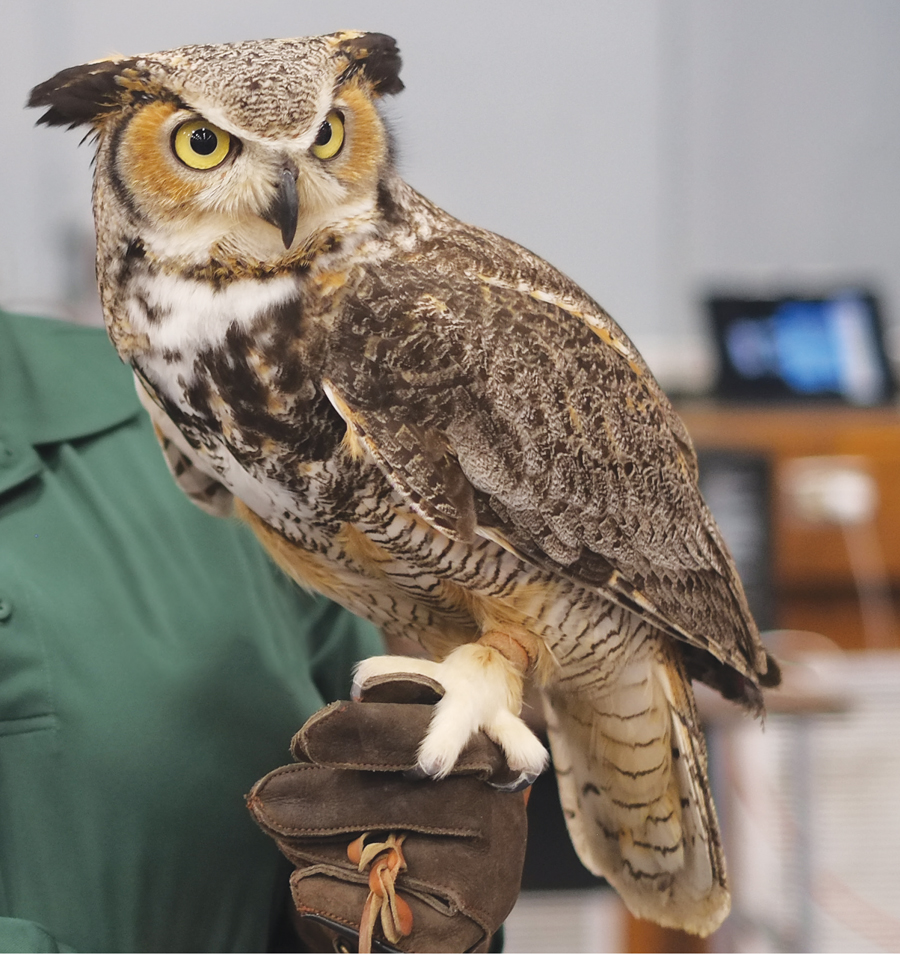 The International Festival Of Owls Minnesota Monthly