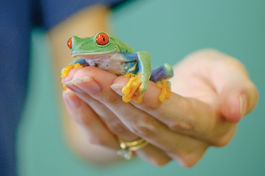 A close up of a woman holding a tree frog at the Reptile and Amphibian Discovery Zoo in Owatonna, MN.