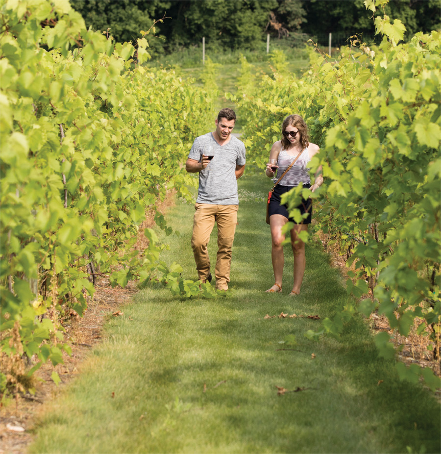 Two people walking through the vineyard at 7 Vines Vineyard.