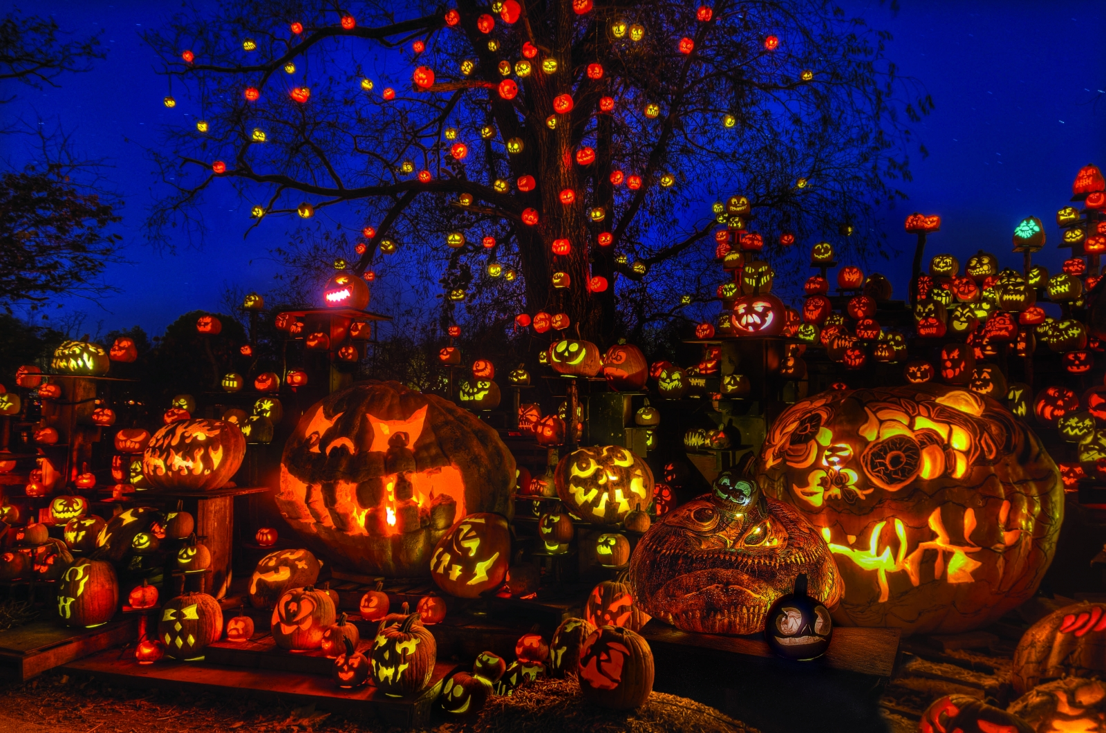 The Jack-O-Lantern Spectacular at the Minnesota Zoo lines the trail with thousands of illuminated pumpkins. Courtesy Minnesota Zoo.