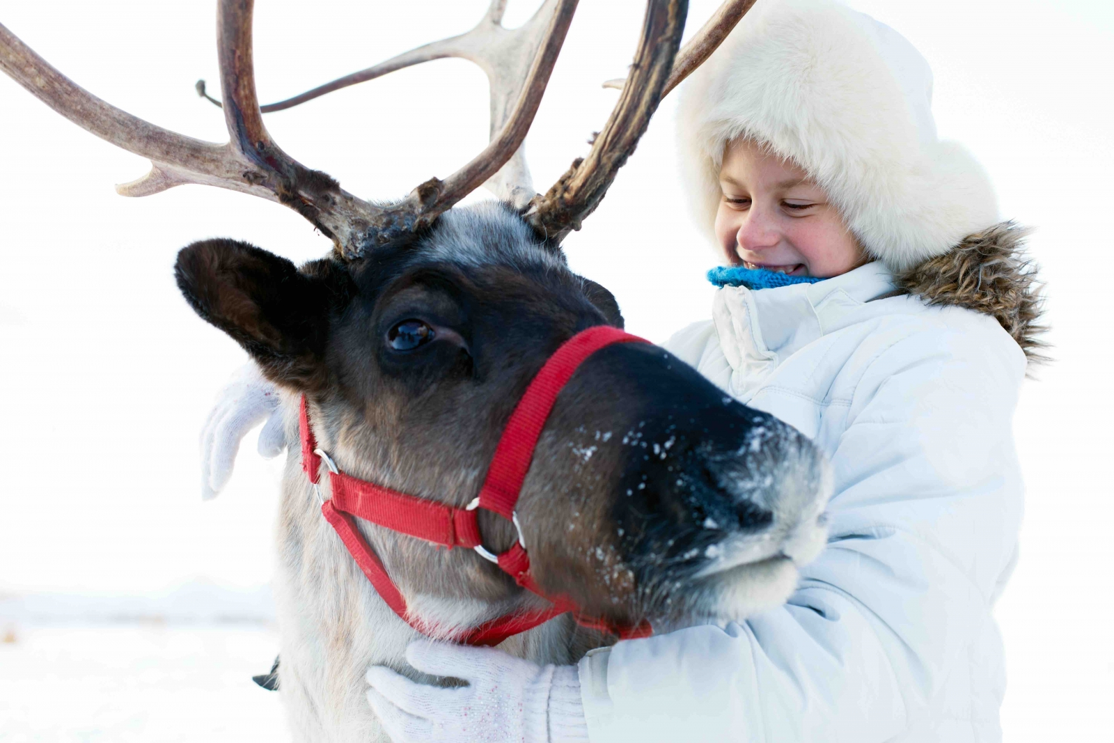 A girl hugging a reindeer. Photo by natasnow/Fotolia