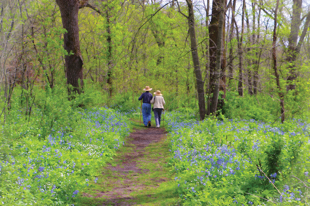A couple walk on a wooded trail surrounded by purple flowers in Carley State Park