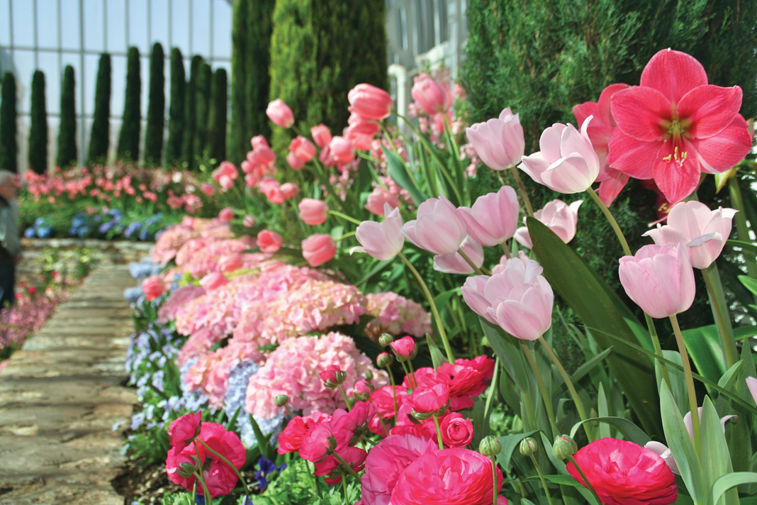 Pink flowers line the edge of the Sunken Garden at the Majorie McNeely Conservatory
