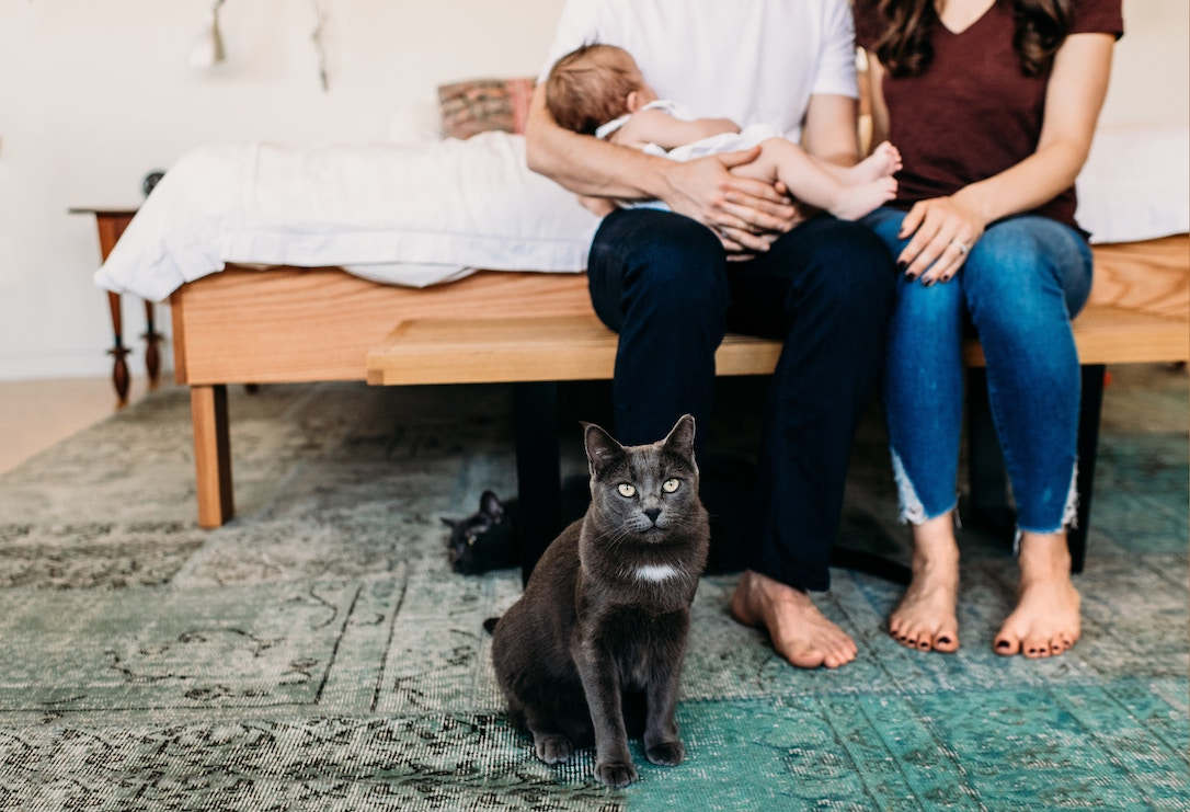 A pet cat and his family