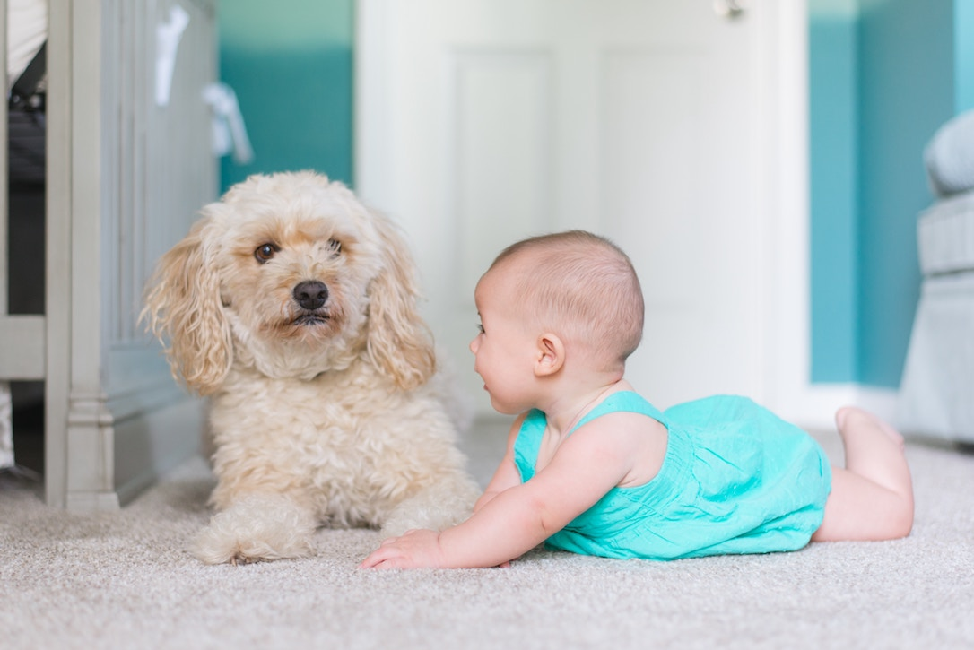 Pet dog with baby crawling toward it, laughing