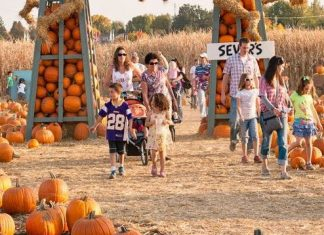 A family picks out pumpkins at Sever's Fall Festival