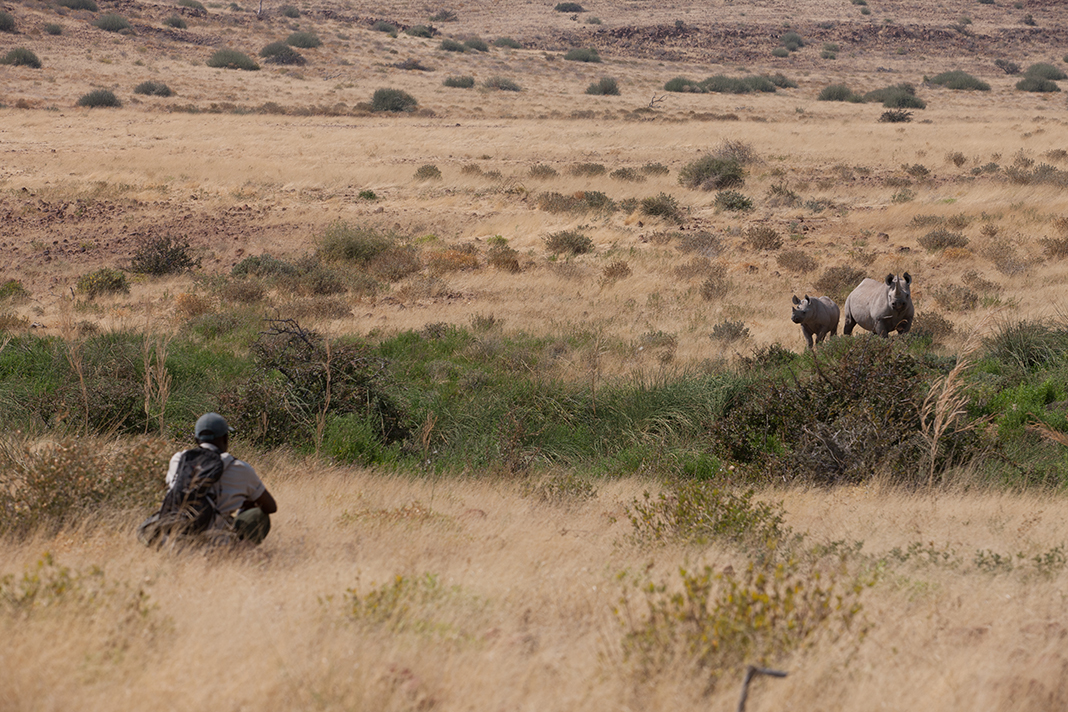 A man crouching in tall grass watching two rhinos in the distance.