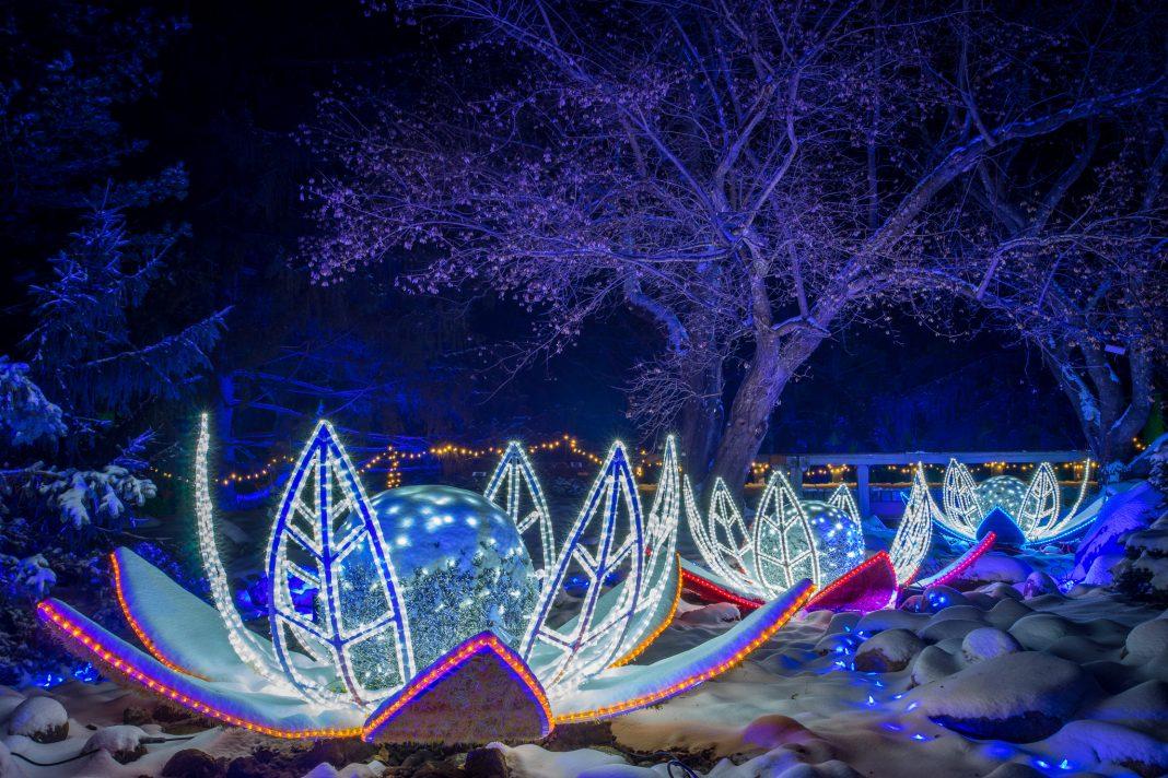 Winter Lights at the Minnesota Landscape Arboretum