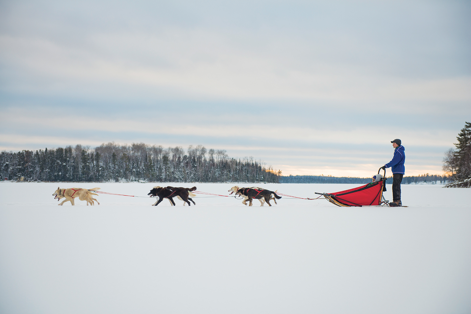 Lake Minnetonka dog sledding