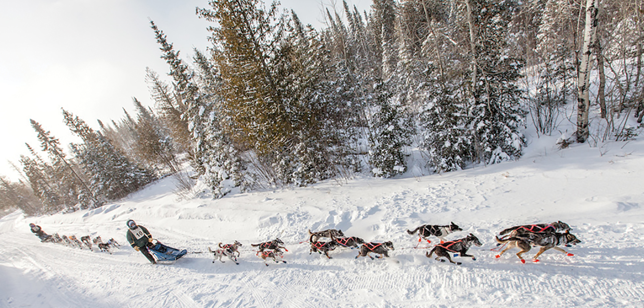 The Gunflint Mail Run Sled Dog Race