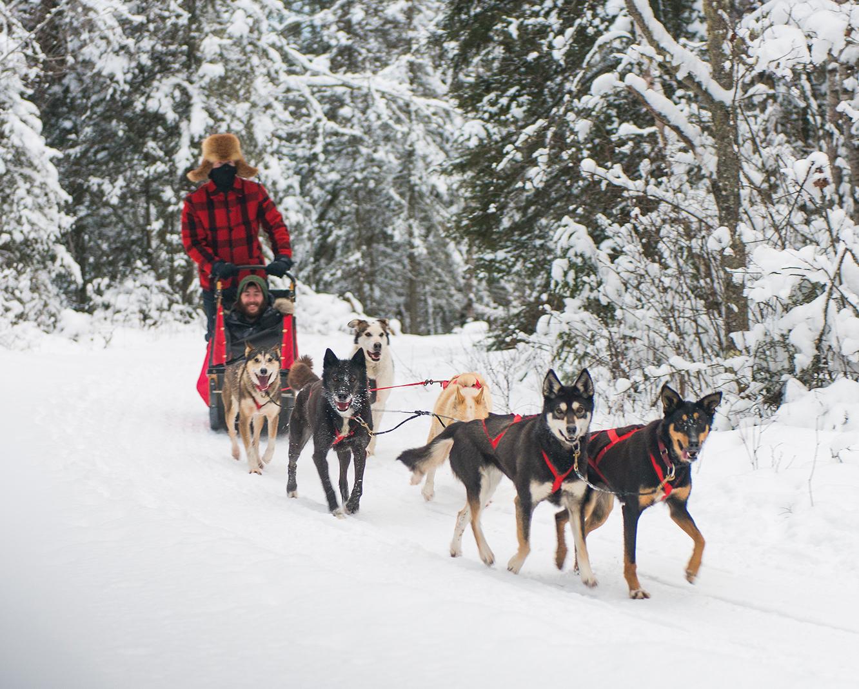 Lake Minnetonka dog sledding