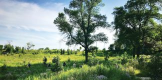 Participants move through the Coldwater Spring oak savanna near Fort Snelling