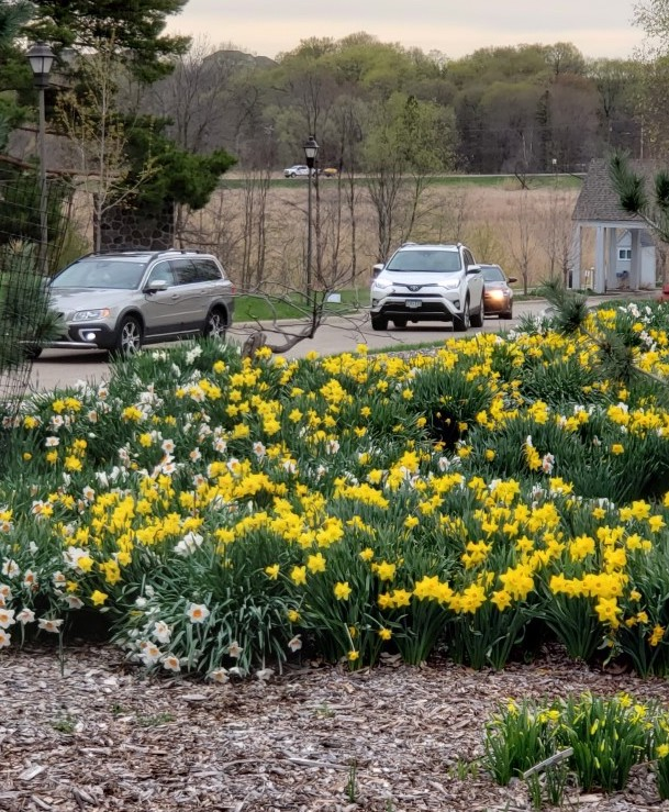 Minnesota Landscape Arboretum begins letting in visitors during COVID-19