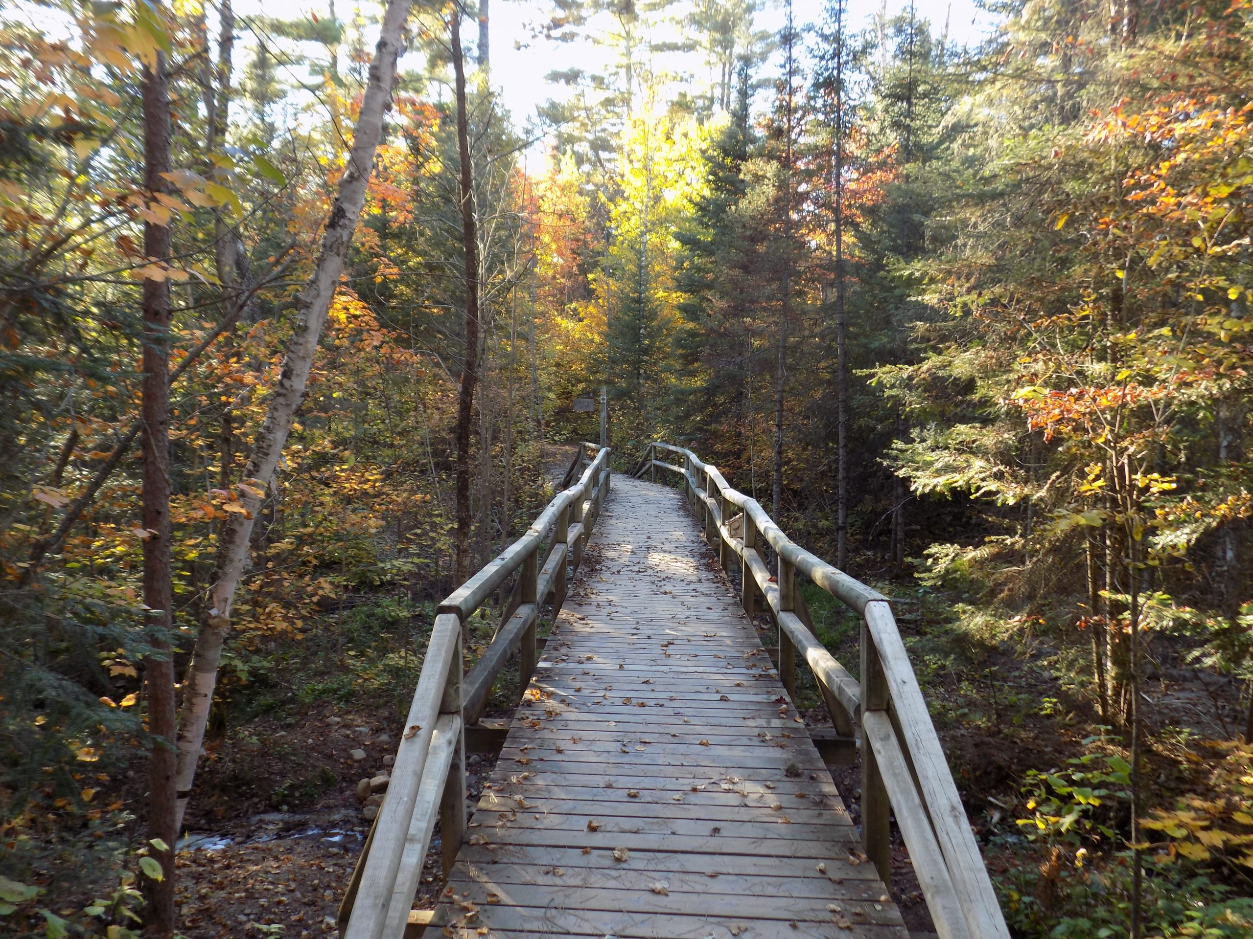 YMCA family camps offer opportunities to hike north wood trails in the fall