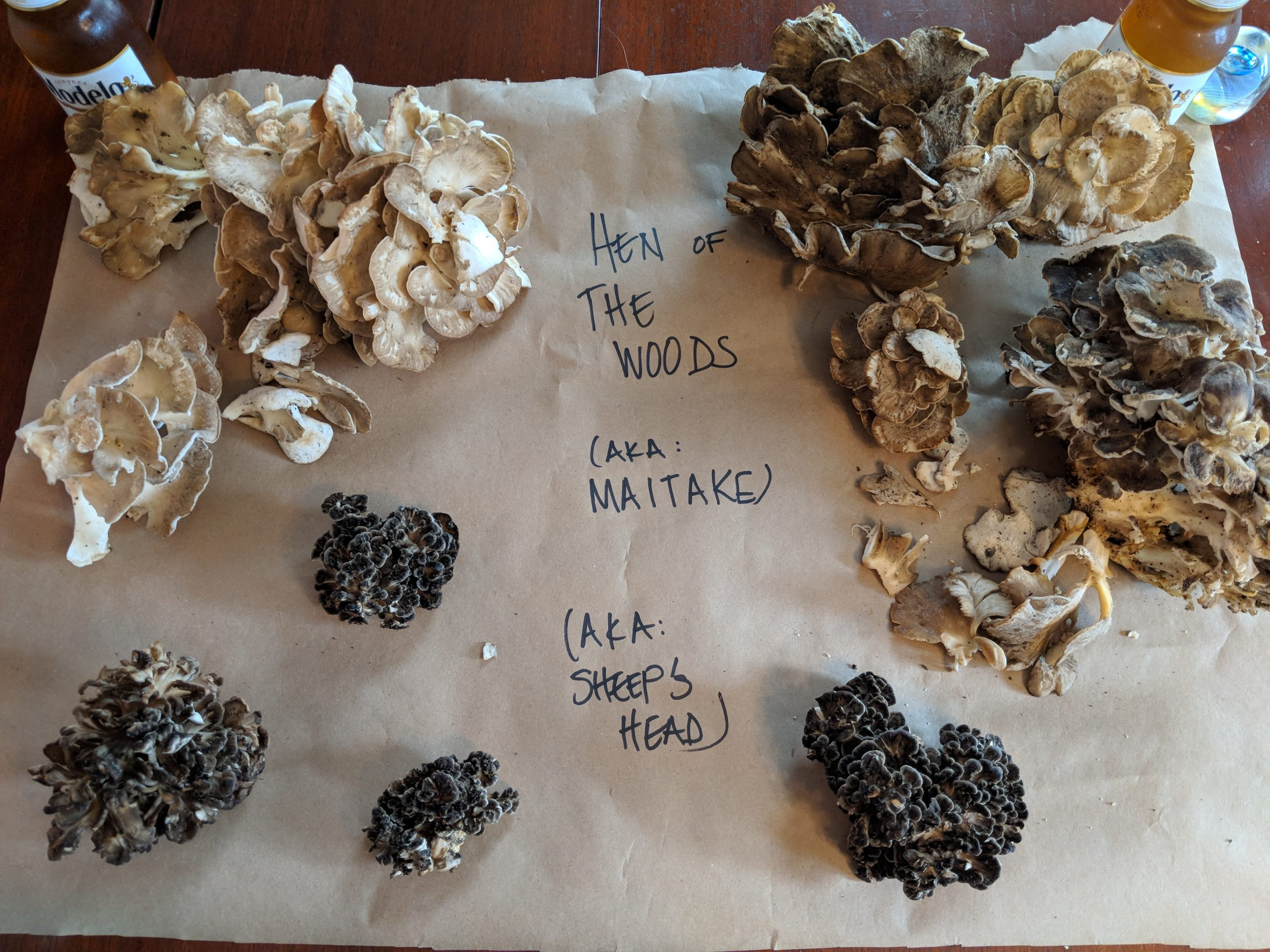 "Check out hen of the woods foraging anecdotes and tips from the blog ""So I Gather."""