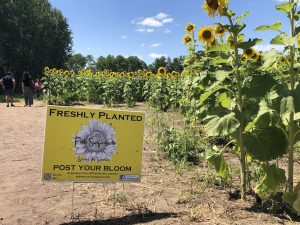 Fish Sunflowers sign at Monticello sunflower field