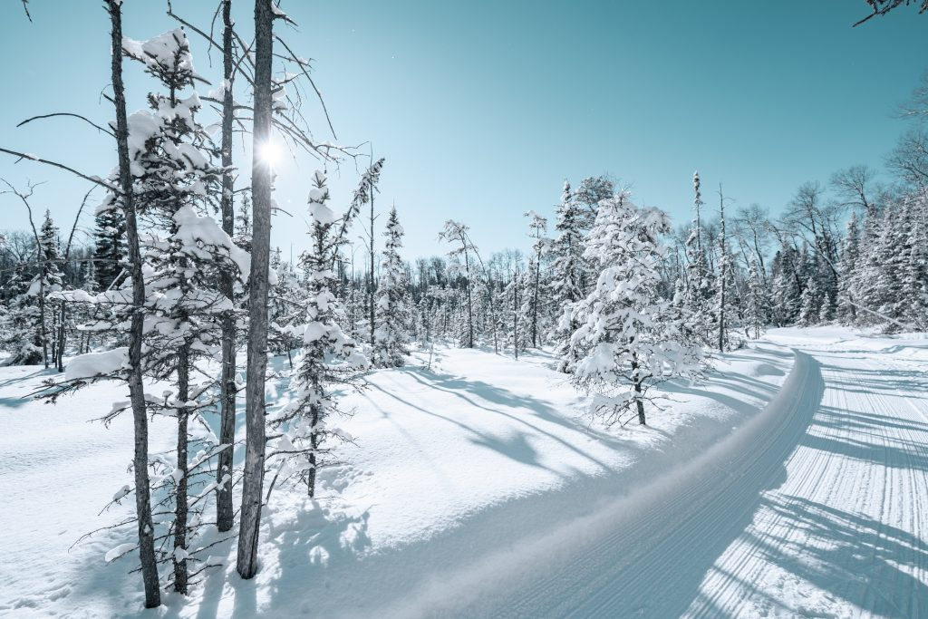 A snowy, tree-lined groomed trail in Ely, Minnesota