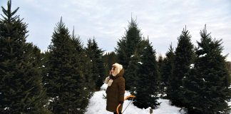 Ashlea Halperns sizes up the selections at Wolcyn Tree Farm in Cambridge, Minnesota. Cutting down your own Christmas tree is romantic, epic, and inherently nostalgic—but it's also trickier than (or just as tricky?) as movies make it out to be.