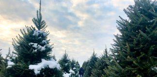 Wolcyn Tree Farms