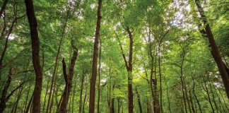 """Better Place Forests' """"living cemetery"""" is also a roundabout means of environmental conservation."""