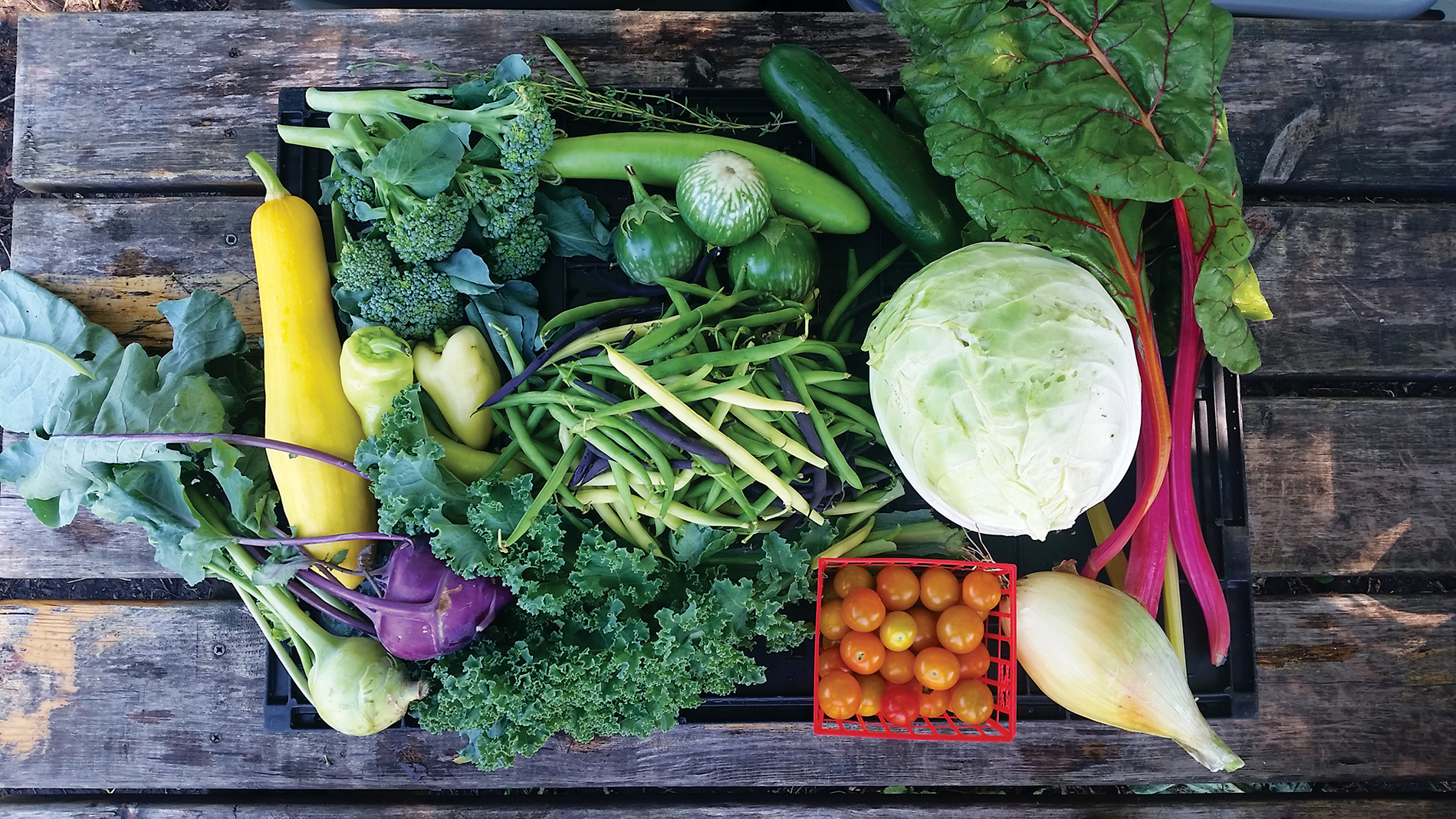 An Open Farms CSA box with a selection of produce from Open Arms of Minnesota's Twin Cities-based urban farms