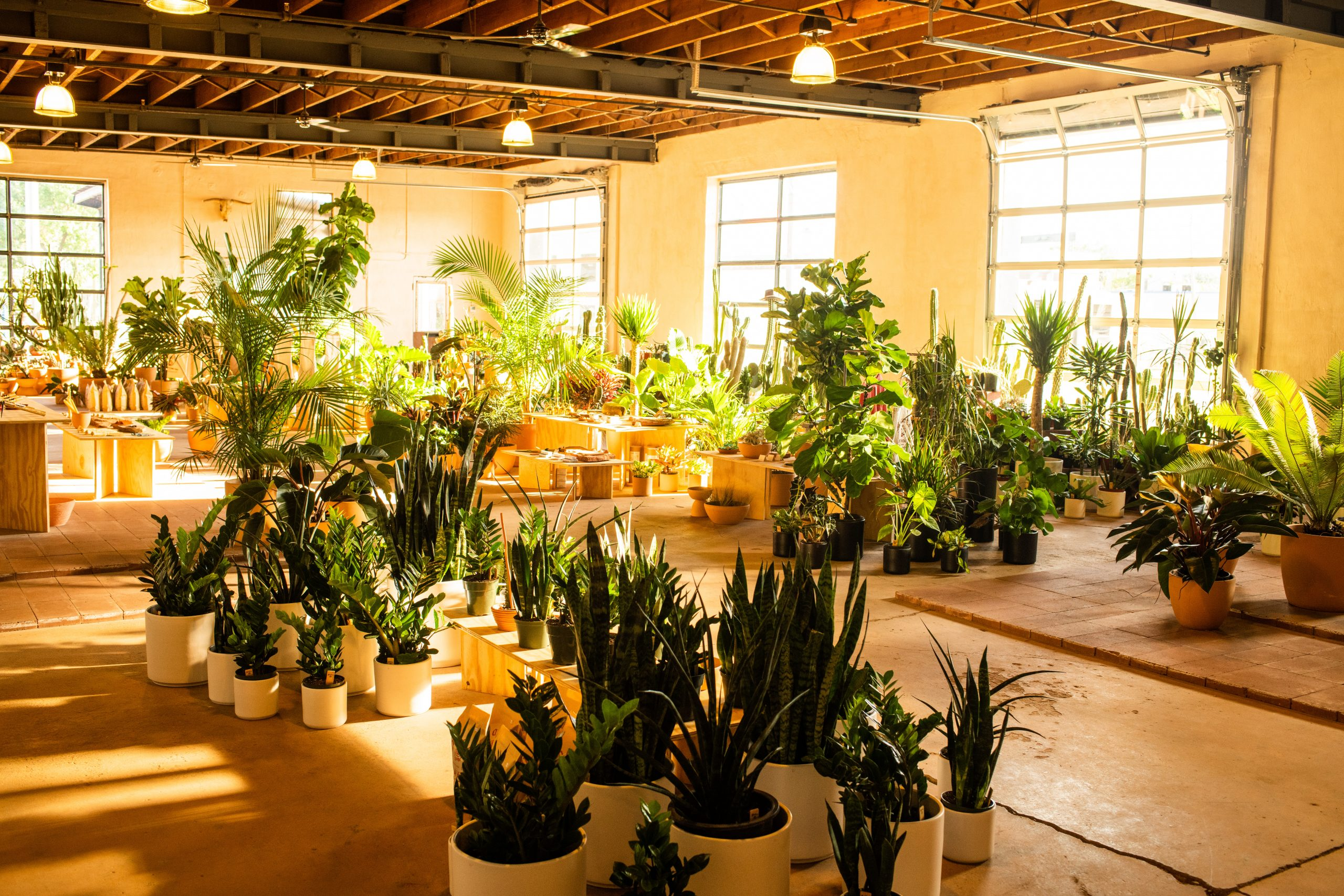 Photo of plants in Mother Co. plant store