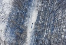 """A scene from """"Breaking Trail"""" shows Emily Ford and sled dog Diggins from above."""